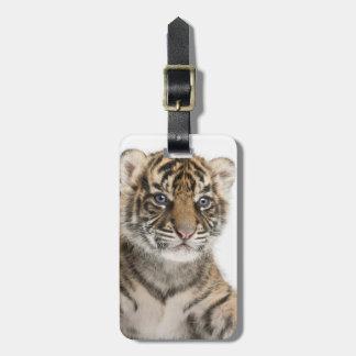Sumatran Tiger cub Luggage Tag