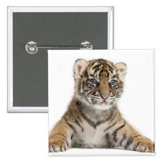 Sumatran Tiger cub - Panthera tigris sumatrae (3 Pinback Button