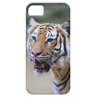 Sumatran Tiger iPhone 5 Case
