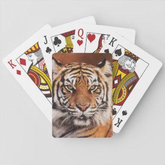 Sumatran Tiger, Panthera tigris Poker Deck