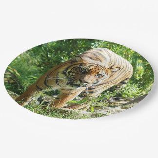 Sumatran Tiger Paper Plate