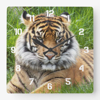 Sumatran Tiger Photo Square Wall Clock
