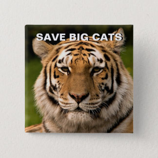 Sumatran Tiger Portrait 2 Inch Square Button