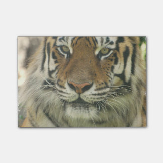 Sumatran Tiger Post-it Notes
