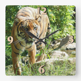 Sumatran Tiger Square Wall Clock