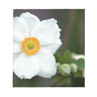 summer-anemone notepad