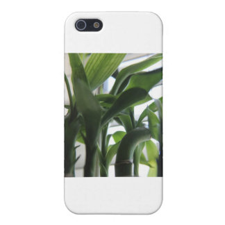Summer Bamboo iPhone 5 Covers