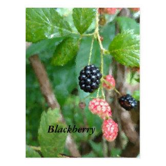 Summer Blackberry Soft-focus Postcard
