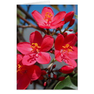 Summer Blooms in Figi Card