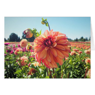 Summer Dahlia Card