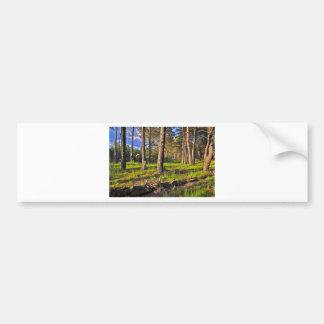 Summer forest in the evening light bumper sticker