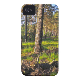 Summer forest in the evening light Case-Mate iPhone 4 case