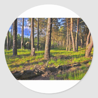Summer forest in the evening light classic round sticker
