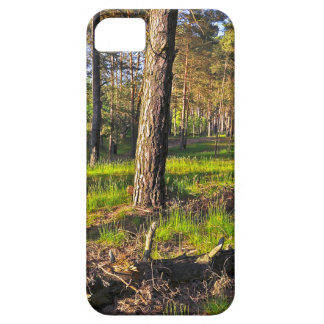Summer forest in the evening light iPhone 5 case