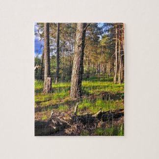 Summer forest in the evening light jigsaw puzzle