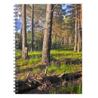 Summer forest in the evening light notebook