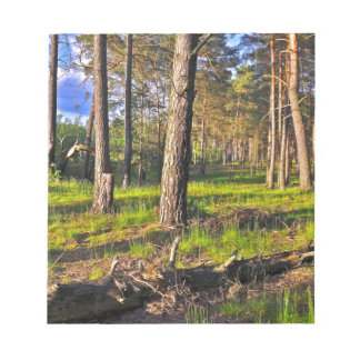 Summer forest in the evening light notepad
