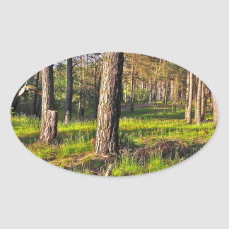 Summer forest in the evening light oval sticker