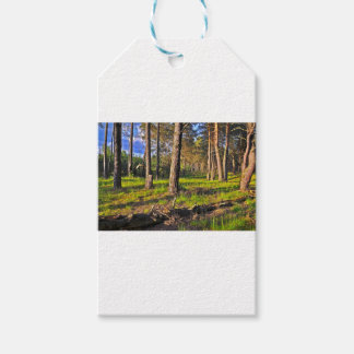 Summer forest in the evening light pack of gift tags