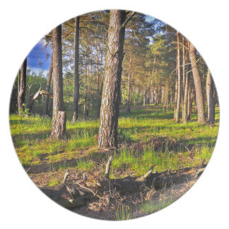 Summer forest in the evening light plate