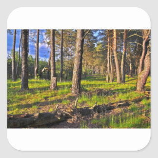 Summer forest in the evening light square sticker