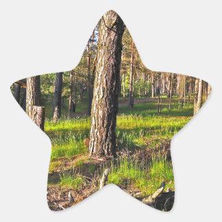 Summer forest in the evening light star sticker