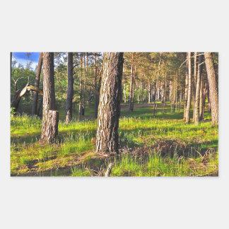Summer forest in the evening light sticker