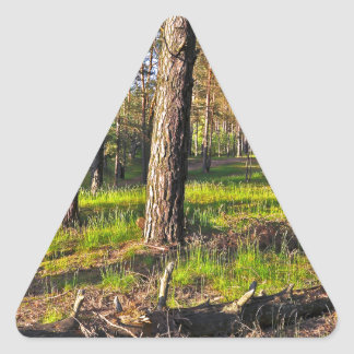 Summer forest in the evening light triangle sticker