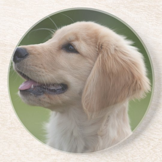 Summer Golden Retriever Puppy Coaster