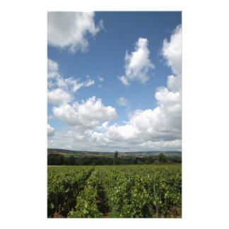 Summer green grapes and blue sky clouds stationery