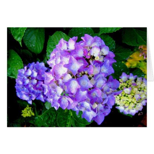 Summer Hydrangea Card