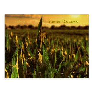 Summer in Iowa Postcard