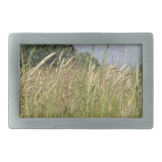 Summer landscape of wild field in the countryside belt buckles