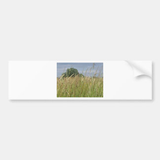 Summer landscape of wild field in the countryside bumper sticker