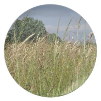 Summer landscape of wild field in the countryside plate