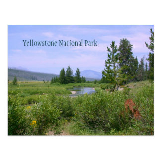 Summer Meadow in Yellowstone Postcard