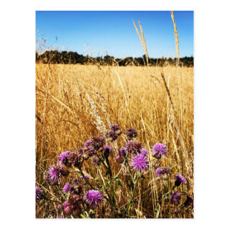 Summer Meadow with Milk Thistle Postcard