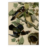 Summer or Wood Duck Greeting Cards