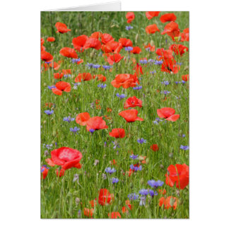 Summer poppies and cornflowers card