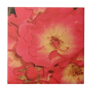 Summer Red Roses Ceramic Tiles