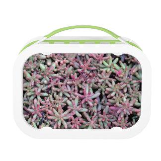 Summer Succulent Natural Pattern Lunch Box