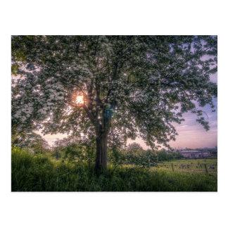 Summer sunbeams breaking through tree branches postcard