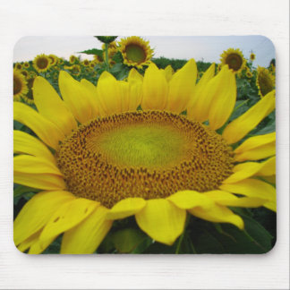 Summer Sunflower Series Mouse Pad