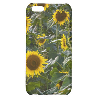 Summer Sunflower Shower iPhone 4 Case