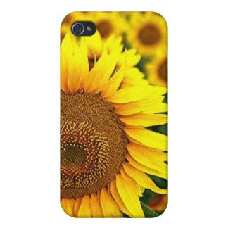Summer Sunflowers iPhone 4 Case