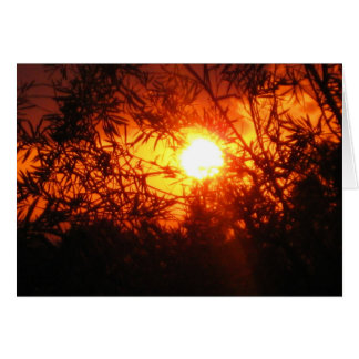 Summer sunset in Canberra Greeting Card