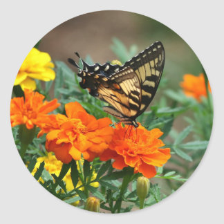 Summer - Swallowtail Butterfly and Pretty Marigold Round Sticker