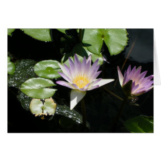 Summer Water Lilies Card