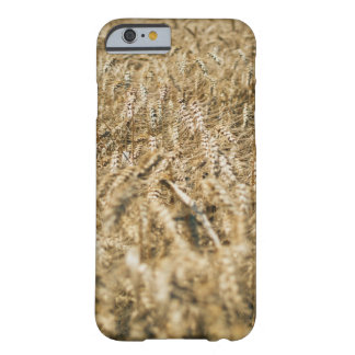 Summer Wheat Field Closeup Farm Photo Barely There iPhone 6 Case