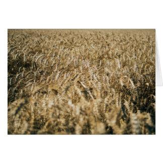 Summer Wheat Field Closeup Farm Photo Card